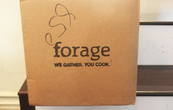 Forage Box - Copy